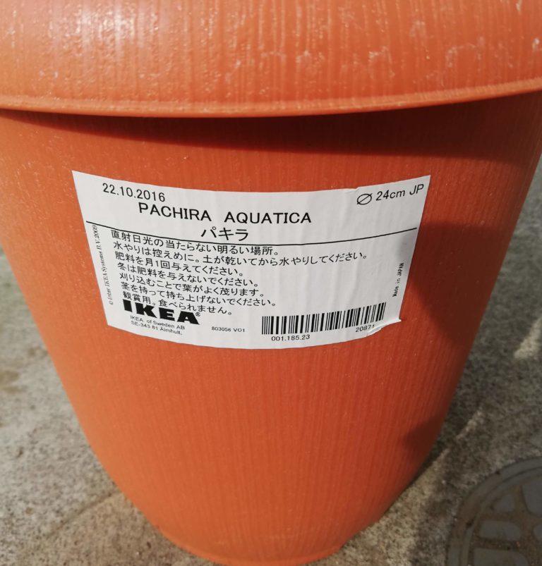 イケアのパキラの鉢は直径24センチ